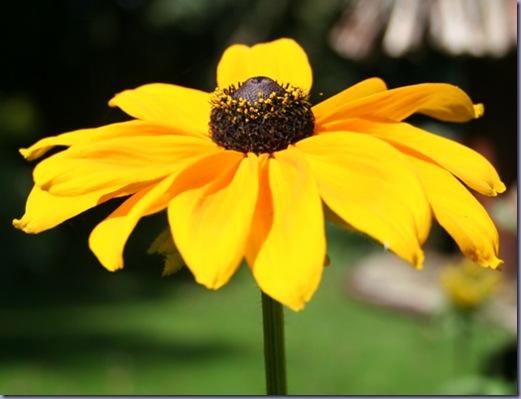 Garden August 001