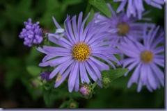 Beth Chatto's Garden 062