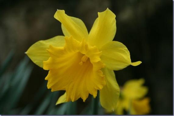 Garden March 031