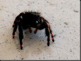 IMG_0161,Spider,crop