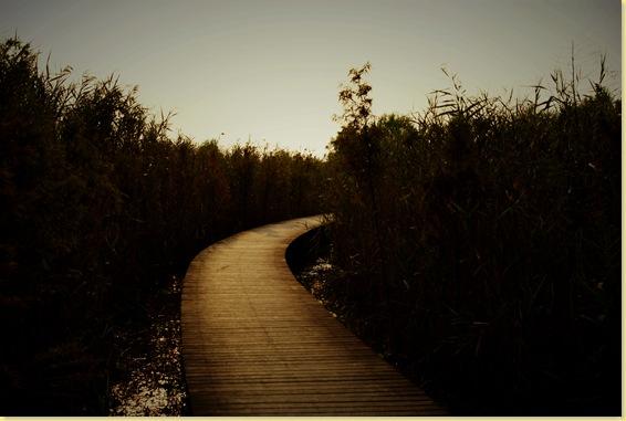 西沙湿地的路